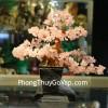 Cây tài lộc đá thạch anh hồng chậu cao KC021