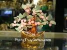 Cây sung thạch anh hồng, lá đông linh KC053