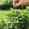 Vòng trang sức hạt lựu khắc chùm nho hạt lựu đỏ S6701