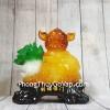 Vua heo vàng cam ngọc ôm bắp cải xanh nhỏ LN009