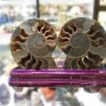 Vo oc hoa thach 01 150x150 Ốc hóa thạch trên đế gỗ K086