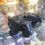 HM079 1 150x150 Rùa đầu rồng hắc ngà HM079