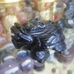 HM079 2 150x150 Rùa đầu rồng hắc ngà HM079