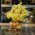 Cay tai loc cam lam KC075 3 150x150 Cây tài lộc đá cẩm lãm đế nén vàng KC075
