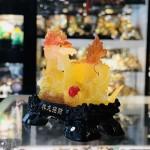 Rồng ngọc lưu ly vàng cam C069A
