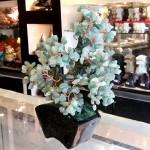 Cay dong linh bonsai chau kieu nhat moi KC119.1.3 150x150 Cây đông linh thân bonsai chậu kiểu nhật mới (Phước) KC119