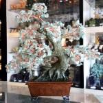 Cay dong linh dai thu chau hoang cung KC116.2 150x150 Cây đông linh đại thụ chậu hoàng cung KC116