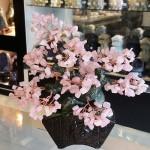 Cay thach anh hong bonsai chau kieu nhat moi KC120.1 150x150 Cây thạch anh hồng thân bonsai chậu kiểu nhật mới (Phước) KC120