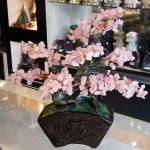 Cay thach anh hong bonsai chau kieu nhat moi KC120.2 150x150 Cây thạch anh hồng thân bonsai chậu kiểu nhật mới (Phước) KC120
