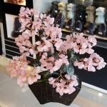 Cay thach anh hong bonsai chau kieu nhat moi KC120.3 150x150 Cây thạch anh hồng thân bonsai chậu kiểu nhật mới (Phước) KC120