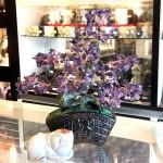 Cay thach anh tim bonsai chau kieu nhat moi KC121.3 150x150 Cây thạch anh tím thân bonsai chậu kiểu nhật mới (Phước) KC121
