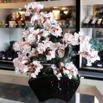Cay thach anh trang bon sai chau kieu nhat KC118.2 150x150 Cây thạch anh trắng thân bonsai chậu kiểu nhật mới (Phước)  KC118