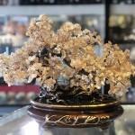 Cây thạch anh vàng lớn gốc đại thụ chậu hoàng gia KC102