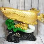 ln165 than ca kim long tren be cai 2.jpg 150x150 Thần cá kim long vàng bóng trên bẹ cải như ý xanh sóng tiền vàng khủng LN165